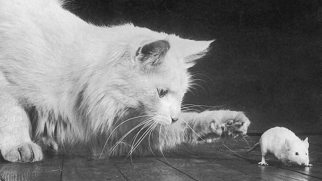 Get a Purr-fect Score on This History of Cats Quiz